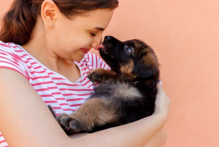 German Shepherd licking owner